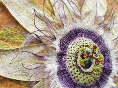 Passion Flower by Corinne Young Textiles Freehand Machine Embroidery, Wool Embroidery, Floral Embroidery, Thread Painting, Silk Painting, Art Du Fil, Art Textile, Sewing Appliques, Felt Art