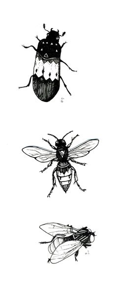 Insects - drawing by Elsa Depont