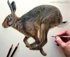 An outstanding piece from The 'original' drawing of 'Harrington' the running hare is looking for a new home and available for purchase. Message Claire for more details . Bird Drawings, Realistic Drawings, Colorful Drawings, Cartoon Drawings, Animal Drawings, Drawing Animals, Hyperrealistic Drawing, Pencil Drawing Tutorials, Rabbit Art