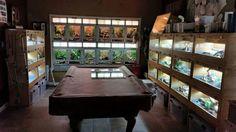 Reptile Room                                                                                                                                                                                 More