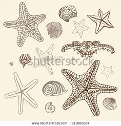 Sea Starfish collection. Hand drawn vector illustration. by Katya Ulitina, via ShutterStock