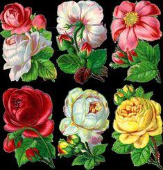 Vintage Roses Scrap ~ http://papirolascoloridas.blogspot.com.ar/2011/08/flores-victorianas.html