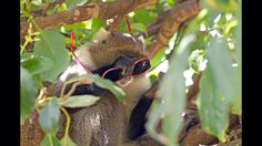 A very cheeky monkey