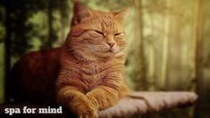 Muzică relaxantă pentru pisici - 30 de minute