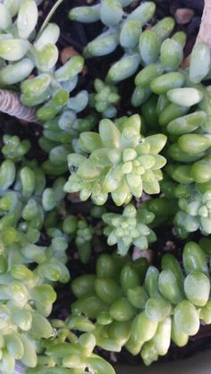 Succulents Fruit, Flowers, Plants, Succulents, Florals, Planters, Flower, Blossoms, Plant
