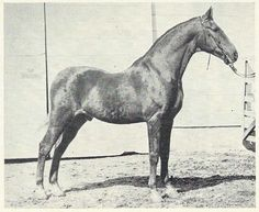 Stonewall King at age 28
