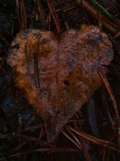 Day 77 - Autumn leaves heart