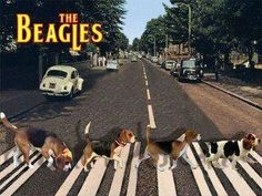 The Beagles - love them!