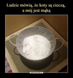 10 Crazy Animal Optical Illusions That Will Confuse You - World's largest collection of cat memes and other animals Cute Cats, Funny Cats, Funny Animals, Cute Animals, Animals Beautiful, Funny Animal Photos, Animal Memes, Animal Pics, Pets