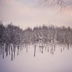 【mi.ka0728.blanc】さんのInstagramをピンしています。 《******** ・ 青い池... なのに、モノクロの池になってました...。 ・ ・ ・ 夏には、(もちろん)とっても綺麗なブルーの池です。 ・ ・ location  北海道  青い池 ************** #bestjapanpics #北海道 #青い池 #雪 #instagramjapan #igersjp #cools_japan #ig_japan_ #icu_japan  #japan_daytime_view  #japan_of_insta #phos_japan #カコソラ #景色 #けしからん風景 #RECO_ig  #team_jp_ #wp_japan #wu_japan  #whim_life  #キタムラ写真投稿 #森 #日本 #as_archive  #s_shot #mono_best15 #bestphoto_japan #bns_ig #wp_pics》