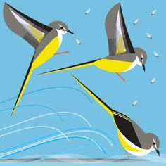 grey wagtail inspiration - Google Search