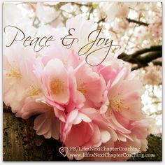 Peace and Joy - cherry blossoms.  Find more inspirational quotes on: https://www.facebook.com/LifesNextChapterCoaching.  Follow my blog on: http://lifesnextchaptercoaching.com/blog/