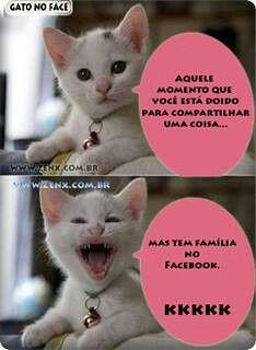 Gato no Facebook.