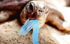 Polietilene:Un mare di plastica minaccia la nostra salute e quella dei pesci #plastica #inquinamento #mare #fondali #