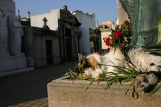 La Recoleta Cemetery in Buenos Aires, home to a large feral cat community