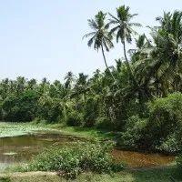 விவசாயம் | Vivasayam பற்றிய கட்டுரைகள் ,தோட்டக்கலை பயிர்கள், ஆடு மாடு வளர்ப்பு Blog Images, Country Roads, Plants, Plant, Planets