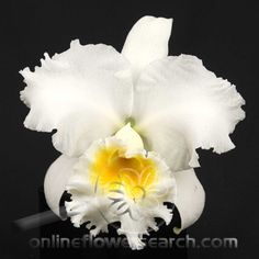 The National Colombian Flower The Cattleya Orchid My Favorite Flower ...