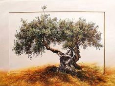 Landscape Painting - Olive Tree by Elidon Hoxha Tree Of Life Pictures, Olive Tree Tattoos, Oak Tree Drawings, Evergreen Tree Tattoo, Bonsai Tree Types, Birch Tree Art, Tree Artwork, Tree Illustration, Illustrations
