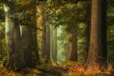 fairy forestry by Lars van de Goor - Photo 171186431 - 500px