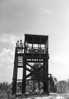 Visitors standing on a birdwatching tower at the Sanibel National Wildlife Refuge - Sanibel Island, Florida  Date 1956  Collection Florida Photographic Collection  Image Number C023592
