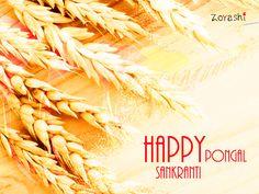 Wishing our dear customers a very Happy Sankranti and Happy Pongal!!! #HappySankranti #Pongal #FestivalsOfIndia #BestWishes #TeamZoyashi #Apparel #IndoWestern #Kurtas #HandmadeWithLove