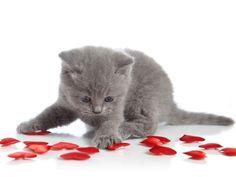 Liebesbrief als Valentinstagsgeschenk für Hund und Katze: Zeigen Sie Gefühle — Bild: Shutterstock / Magone    www.einfachtierisch.de