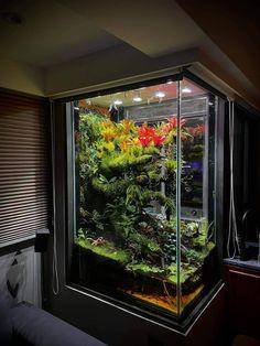 Amphibians, Reptiles, Tropical Terrariums, Nano Aquarium, Growing Gardens, Terrarium Plants, Terraria, Chameleons, Welcome To The Jungle