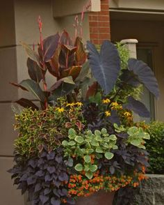 Designer Secrets for Over-The-Top Pots - Learn the dos and don'ts of creating jaw-dropping containers -   Read more: http://www.finegardening.com/designer-secrets-over-top-pots#ixzz3Prf1YNjI
