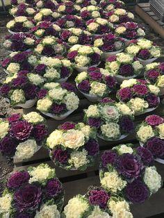 How to Plant Potted Flowers Outdoors in the Soil : Garden Space – Top Soop Backyard Garden Landscape, Big Garden, Garden Spaces, Dream Garden, Succulents Garden, Garden Pots, Cabbage Plant, Ornamental Cabbage, Autumn Garden
