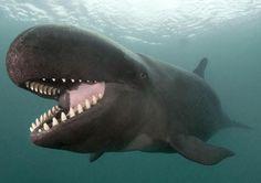 #whale…