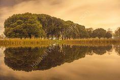 Citadel Pond, Phoenix Park, Dublin