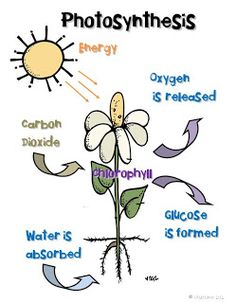 Free Photosynthesis anchor chart  Around the Kampfire blog