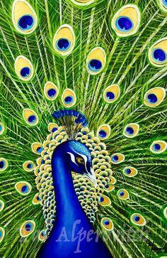 "Tal Alperovitch Art ""The Peacock"" Oil on Canvas 100 x 70 cm Peacock painting art Animal art Love Animals Beauty green blue graceful peacock Home decoration Home styling  טל אלפרוביץ הטווס - ציור שמן על קנבס טווס בירוק כחול יפהפה אומנות ישראלית בעלי חיים טווסים עיצוב הבית  הום סטיילינג"