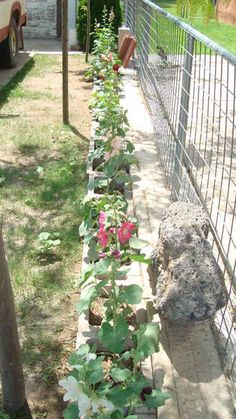 Flower bed in concrete pots, great idea, may use that for building garden beds on already concreted areas that I need to dress up.