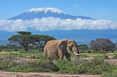 Join a group to trek up Kilimanjaro on the least crowded and scenic route while you support local tourism. Book now! See www.peakexplorations.com for details or see below.  Kilimanjaro (Northern Circuit) - Peak Explorations
