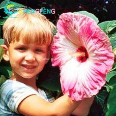 100pcs Giant Hibiscus Flower Seeds Hardy Mix Color Diy Home Garden Potted And Yard Flower Plant Free Shipping Plantes Rose Gift #clothing,#shoes,#jewelry,#women,#men,#hats,#watches,#belts,#fashion,#style