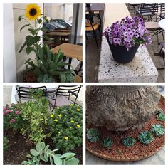 Flowers @ Corso Como Cafe • food bar
