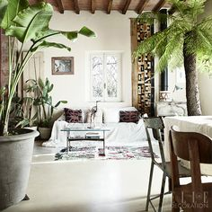 Plants and palms are combined with tribal vintage and salvaged furniture in this serene Italian farmhouse.