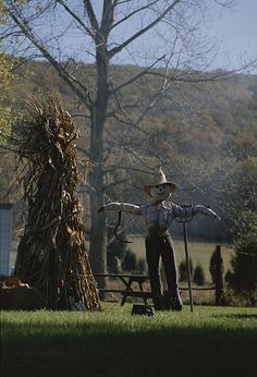 Fall Scarecrow nothing to protect now @Harry Dent Robin White