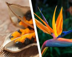 Did you know that the Bird of Paradise Flower actually starts out from this unique little seed? It's true. And it's also one of the ingredients in our newest skincare line. Discover the power of the seed on January 26th.