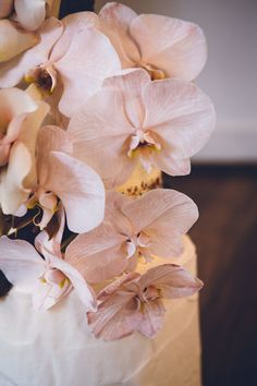 wedding cake with blush-toned orchids Orchid Wedding Cake, Orchid Cake, Wedding Bouquets, Wedding Flowers, Phalaenopsis Orchid, Orchids, Orchid Flowers, Orchid Arrangements, Romantic Photography