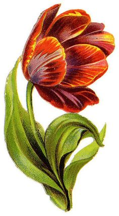 Flowers436