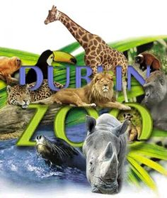 List of animals at dublin zoo – A Selection of Pins about Animals Dublin Zoo, Visit Dublin, Dublin City, Dublin Ireland, List Of Animals, Large Animals, Dublin Attractions, Pass Photo, Baby Rhino