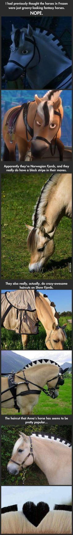 Frozen horses in real life