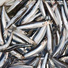 Ocean 'breathability' key to past future habitat of West Coast marine species Celery Smoothie, Especie Animal, Rockfish, California Coast, Fish Oil, Catfish, Weight Loss Smoothies, Marine Life, West Coast