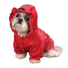 Red Ruffle dog Raincoat. I absolutely LOVE This Raincoat! It would Look GREAT ON Emma!!
