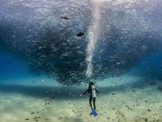 All the Fish in the Sea - http://photography.nationalgeographic.com/photo-of-the-day/diver-fish-cabo-pulmo/