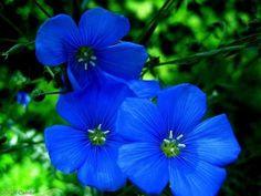 Miren qué belleza | Cuidar de tus plantas es facilisimo.com