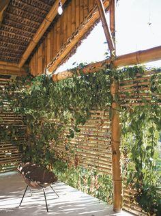 casa no esprito santo tem construo artesanal e muito bambu casa