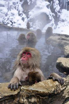 Snow Monkeys Nagano | Amanda Wang